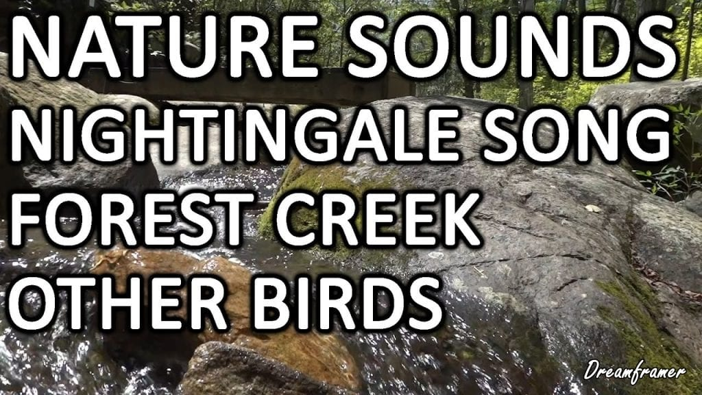Nightingale Song and Creek