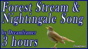 forest stream and nightingales