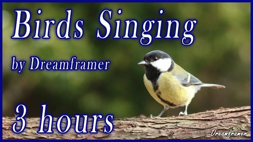 Birds Singing Nature Sounds